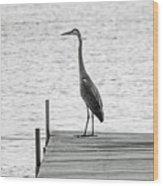 Great Blue Heron On Dock - Keuka Lake - Bw Wood Print