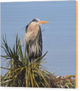 Great Blue Heron On Nest In A Palm Tree Wood Print