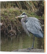 Great Blue Heron On The Watch Wood Print by George Randy Bass