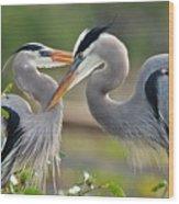 Great Blue Heron Pair 3 Wood Print