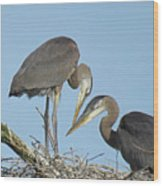 Great Blue Heron Pair Wood Print
