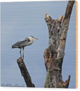 Great Blue Heron Perched Wood Print