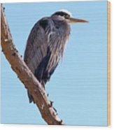 Great Blue Heron Perched On Tree Branch Wood Print
