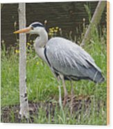 Great Blue Heron Wood Print