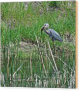 Great Blue Heron Series 5 Of 10 Wood Print