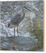 Great Blue Heron Standing In Stream Wood Print
