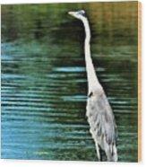 Great Blue Heron Standing Tall Wood Print