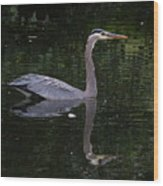 Great Blue Heron Swimming Wood Print