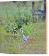 Great Blue Heron Visitor Wood Print