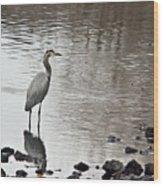 Great Blue Heron Wading 2 Wood Print