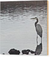 Great Blue Heron Wading 3 Wood Print by Douglas Barnett