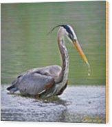 Great Blue Heron Wading Wood Print