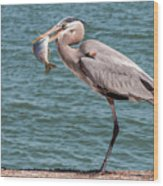 Great Blue Heron Walking With Fish #2 Wood Print