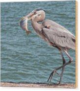 Great Blue Heron Walking With Fish #3 Wood Print