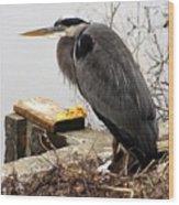 Great Blue Heron Wildlife Bird Wood Print