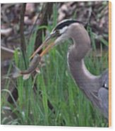 Great Blue Heron With His Catch Wood Print