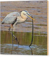 Great Blue Heron Wrestles A Snake Wood Print