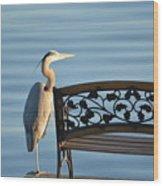 Great Blue Heron....resting My Leg Wood Print