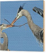 Great Blue Herons Build A Nest Wood Print