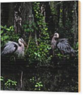 Great Blue Standoff In Watercolor Wood Print