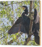 Great Cormorant - High In The Tree Wood Print