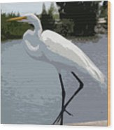 Great Egret    Ardea Alba Wood Print