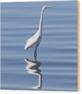 Great Egret - 2  Wood Print
