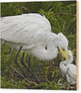 Great Egret And Chick Wood Print