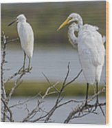 Great Egret And Snowy Egret Perched Wood Print