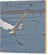 Great Egret Ascending Wood Print