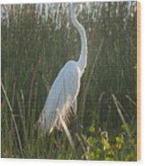 Great Egret At Coba Village Wood Print