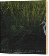 Great Egret At Ft George Inlet  Wood Print