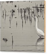 Great Egret At Horicon - B - W  Wood Print