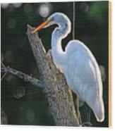 Great Egret At Rest Wood Print