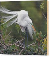 Great Egret Bridal Train Wood Print