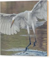Great Egret Chase 072316-9861-2cr Wood Print