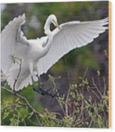 Great Egret Coming In For Landing Wood Print