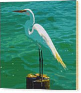 Great Egret Emerald Sea Wood Print