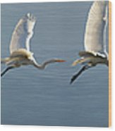 Great Egret Flight Sequence Wood Print