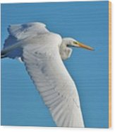 Great Egret Flying High Wood Print