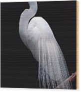 Great Egret II Wood Print