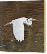 Great Egret In Flight Wood Print