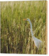 Great Egret In The Morning Dew Wood Print