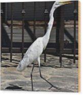 Great Egret In The Neighborhood Strutting 1 Wood Print