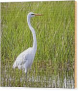 Great Egret In The Spring  Wood Print