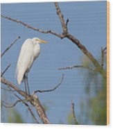Great Egret In Tree Wood Print