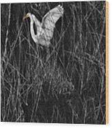 Great Egret Inthe Marsh Wood Print