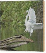 Great Egret Landing Wood Print