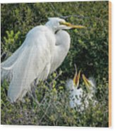 Great Egret Mom And Babies Wood Print