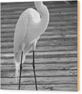 Great Egret On The Pier - Black And White Wood Print